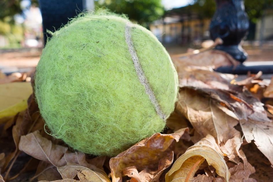 tennis-ball-512480_960_720.jpg